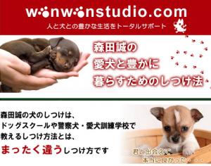 morita_dog_3